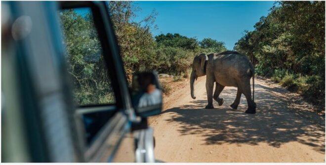 Get close to Asian elephants