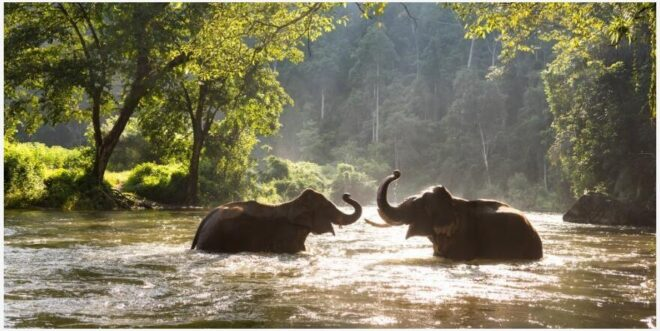 What is World Elephant Day